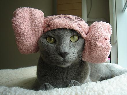 Намотал коту полотенце на голову? В твиттер, срочно в твиттер!