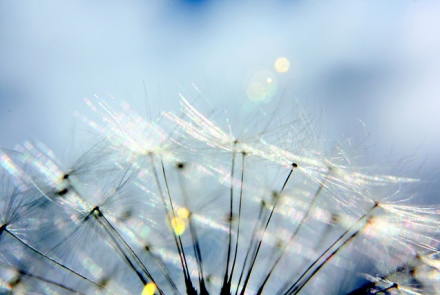 Фото: flickr.com/marfis75