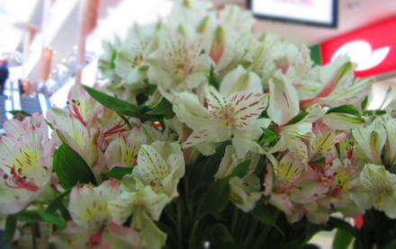 Цветы похожие на лилии только маленькие 120