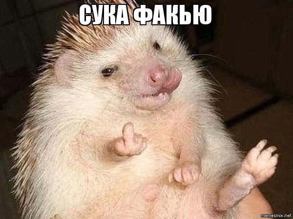 kakoy-orgazm-u-ezhikov