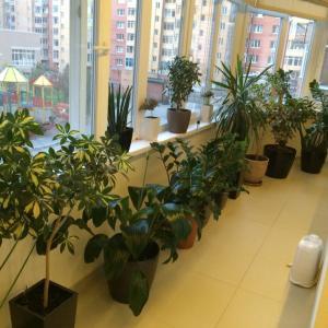 Мои стойкие растения