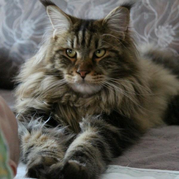 Отдельное спасибо от кота :)