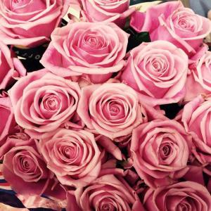 25 красивейших и свежайших роз)