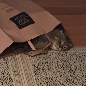 ... и даже коту досталось!))