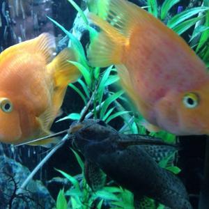 Вот такие классные рыбки радуют посетителей в стоматологии