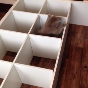 сборка мебели быстро, качественно, недорого,мяу