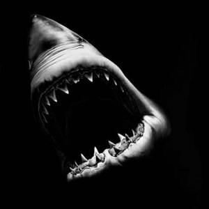 Sharkyou