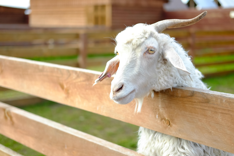 вас дергаются коза дереза красноярск база написать любимой