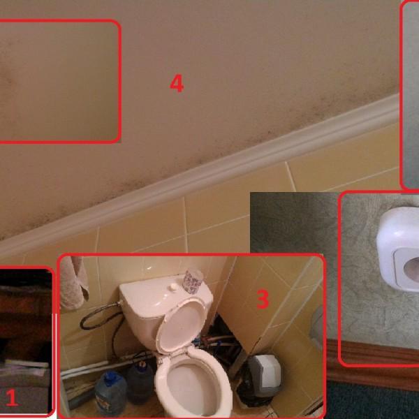 1 - мыши в домиках 2 - отваливающиеся розетки, оторванные обои 3 - весь хлам 4 - плесень в ванной