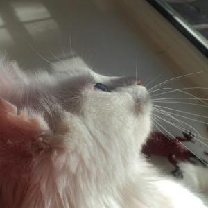 Наш котик