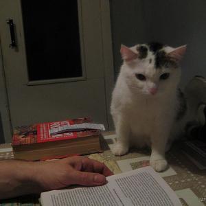 Это кошка Люся до операции, но  после болезни, еще не бутуска))