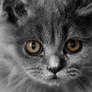Felis cat