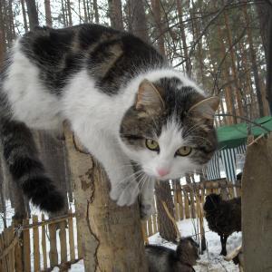 Фотогеничность кота зашкаливает)