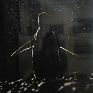 Вот такой замечательный пингвин есть среди экспозиционных работ