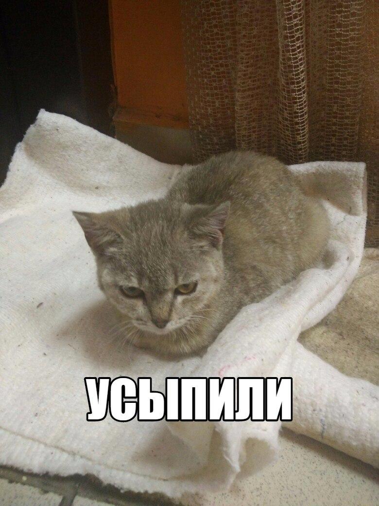 Ветеринарные клиники полтавы