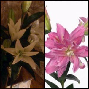 Справа - цветы, которые должны были привезти, слева - цветы, которые привезли