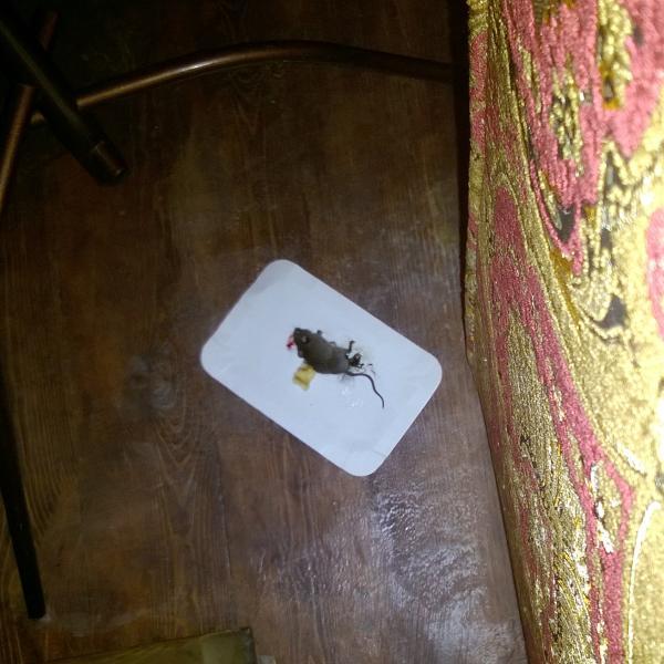 Ловись мышка и большая, и маленькая.