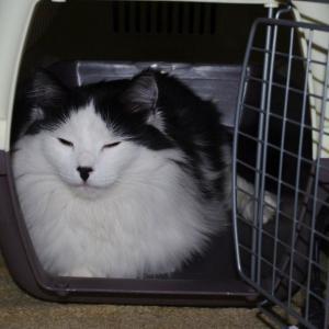 мой котейко сразу занял переноску как только курьер принес ее:)