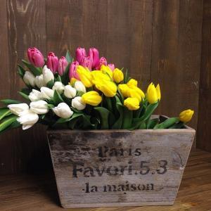 такая весна!!!)) У меня эти тюльпаны уже второю неделю стоят