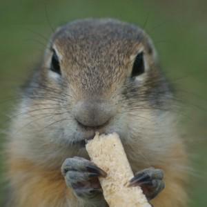 Местный житель, с хлебным кусочком.