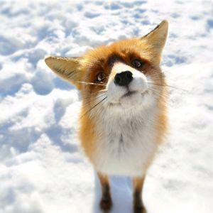 Foxyfoxy