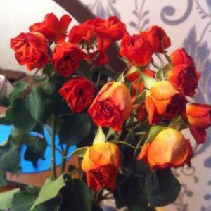 """""""свежие цветы """" спустя 3 часа!"""