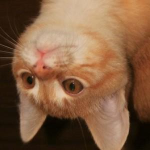 Котики -отдельная тема, о которой вам может быть расскажут во время обучения , а может и не быть ;)