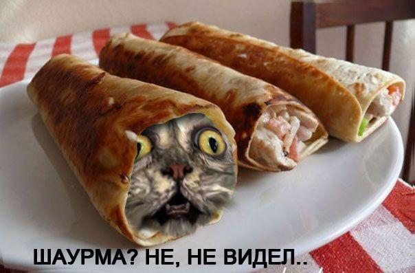 фото шаурмы с котятами #1