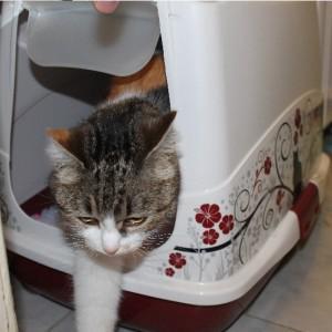 """Довольная кошка провела минут 20 в """"подарке"""")))"""
