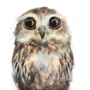 OwlInADenseForest.