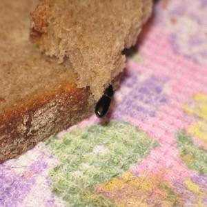 жук в хлебе