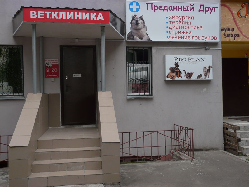 ветеринарная клиника на светлановской площади нарушения